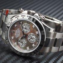 Rolex [NEW] Cosmograph Daytona 116509 WG Black M.O.P. Diamond